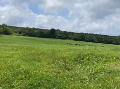 牧場に牛が…見えますか?